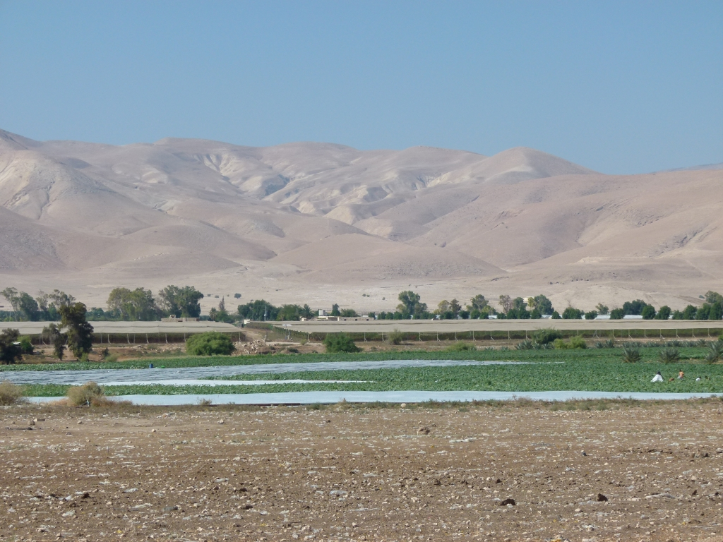 Irrigated areas near Israeli settlements in the Jordan River Valley. Photo: Cara Flowers.