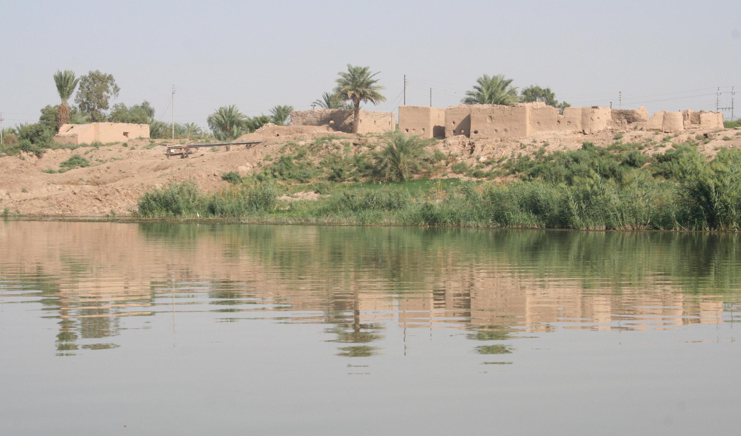 Iraq water river palm trees