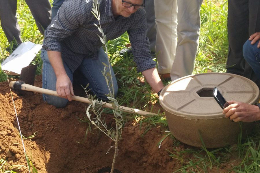 Training participants to plant olive trees using the COCOON