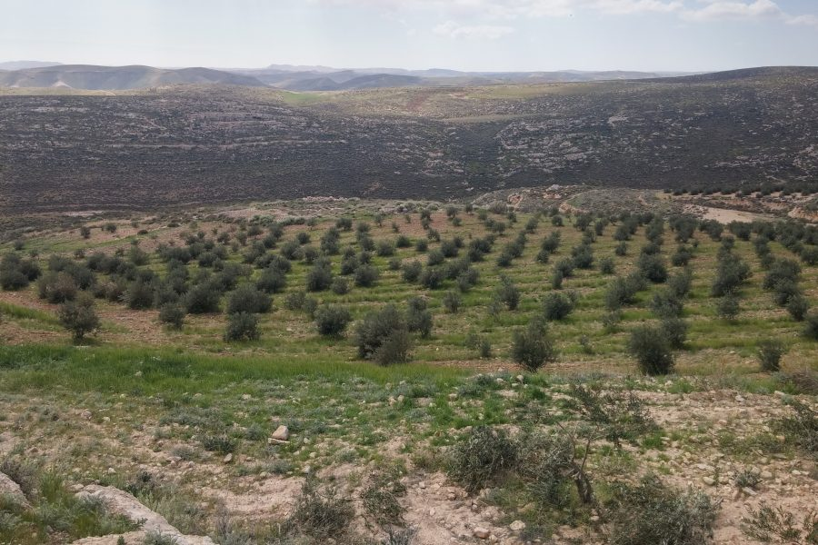Second planting site, Wad al-Reem, Saer