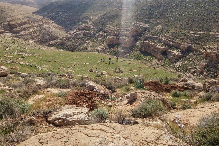 Second planting site, Wad al-Reem, Saer, Hebron, Palestine.