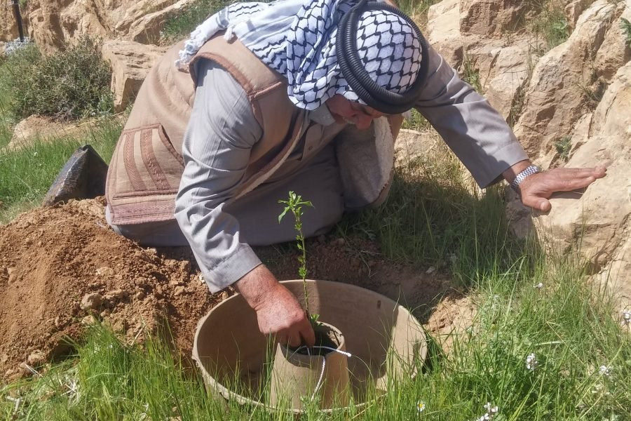 Planting an almond tree