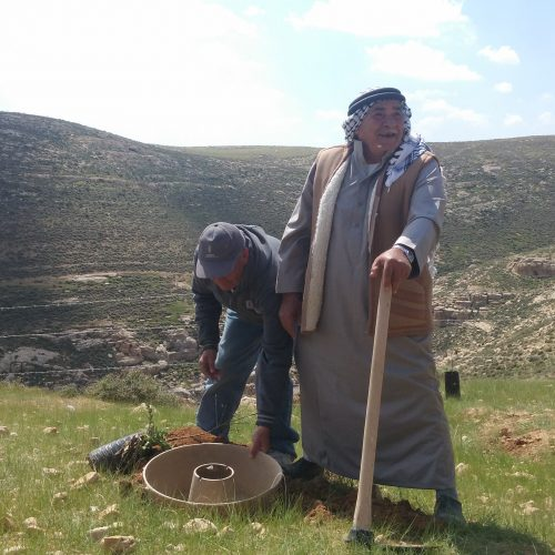 COCOON Planting Technology to Grow Trees in Palestine