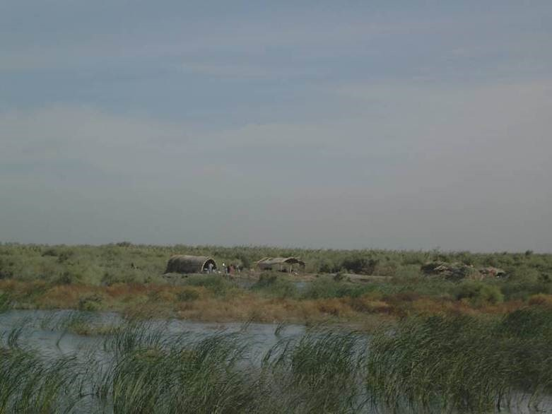Marsh dwellers returning to the Central Marsh