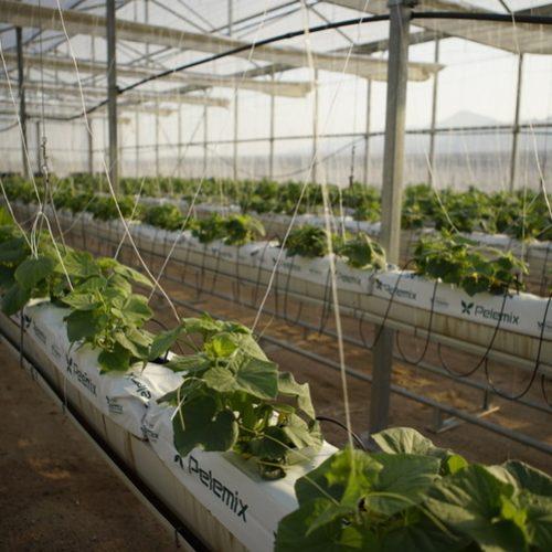 مشروع زراعي في العقبة يستخدم المياه المالحة للتخفيف من الضغط على  إنتاج الغذاء والطاقة والمياه العذبة في الأردن