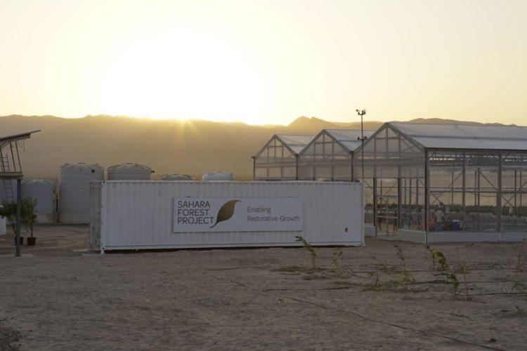 Forest Project in Aqaba المياه المالحة العقبة
