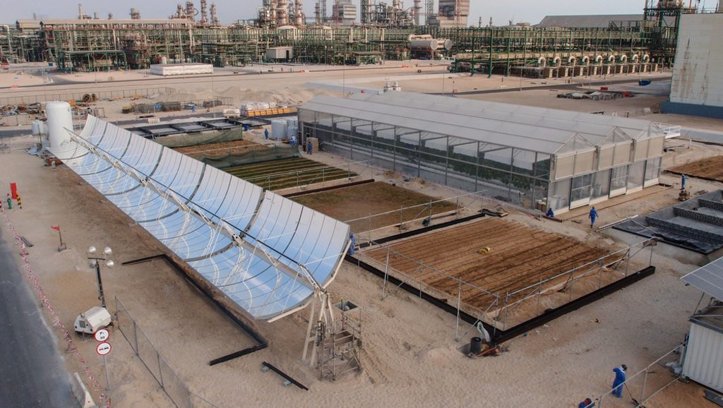 Forest project in Qatar