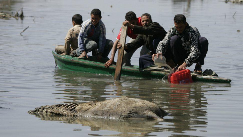 الصورة 1: مصري على متن قارب يملأ برميلاً بلاستيكياً بالماء بجانب حمار ميت في بلدة البرلس في دلتا النيل ، 300 كلم شمال القاهرة، في 16 مارس 2008. (المصدر: Flickr, Nasser Nouri)