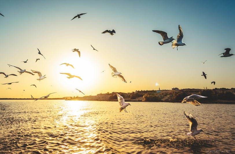 الصورة 1: بحيرة ناصر، أسوان، مصر. (المصدر: Flickr, Mohamed Atef)