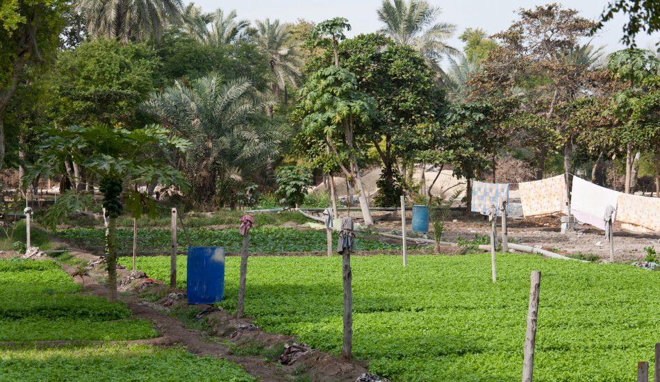 Farms in bahrain