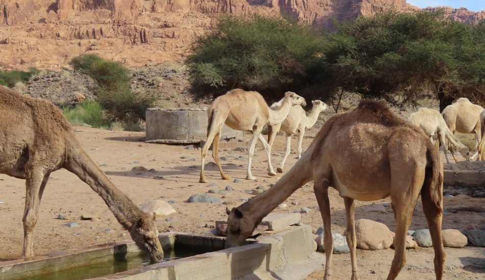 وادي الديسة، موارد المياه المشتركة في السعودية