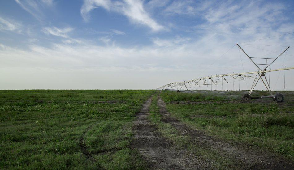 Irkaya Farm, Qatar, Water Use in Qatar